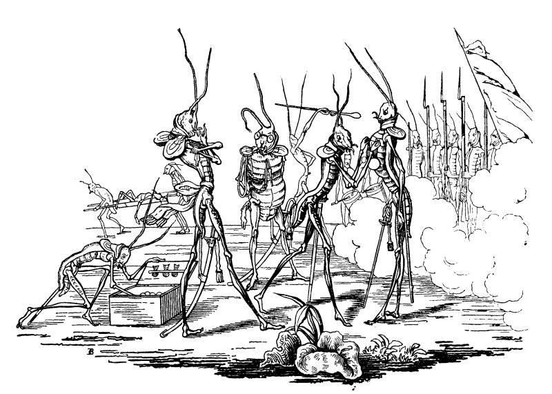 Gräshoppa dubbas till riddare